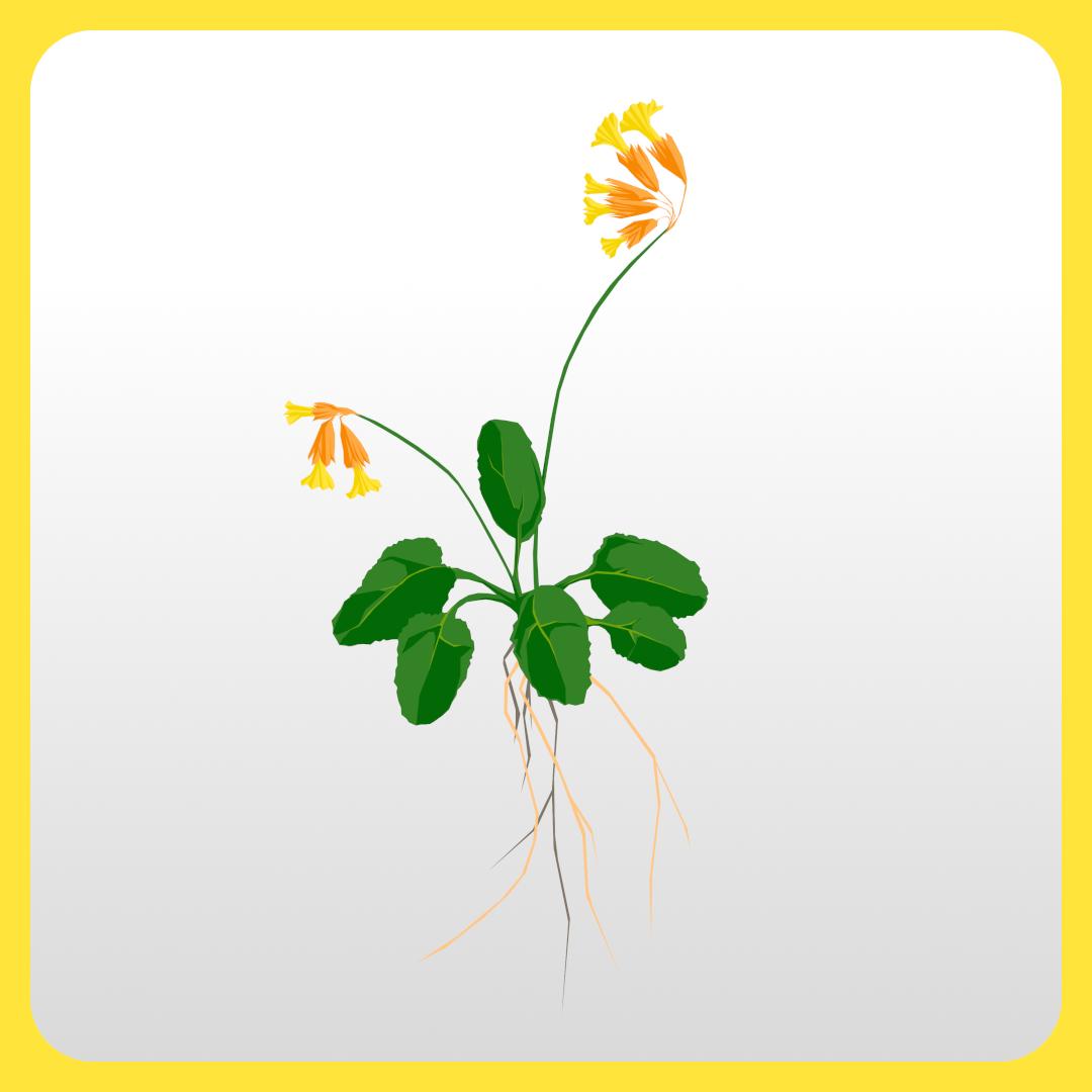 Wild Flower Drawing